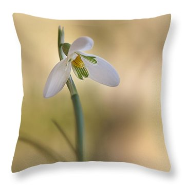 Throw Pillow featuring the photograph Spring Messenger by Annie Snel