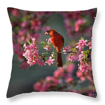 Spring Morning Cardinal Throw Pillow