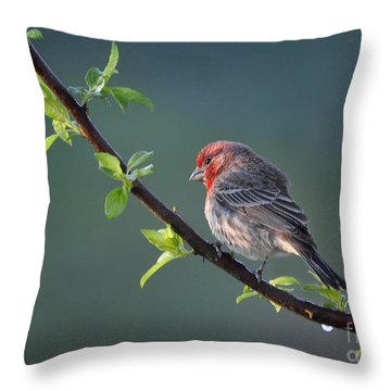 Throw Pillow featuring the photograph Song Bird In Spring by Nava Thompson