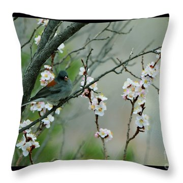 Spring Snow In Apricots Throw Pillow by Susanne Still