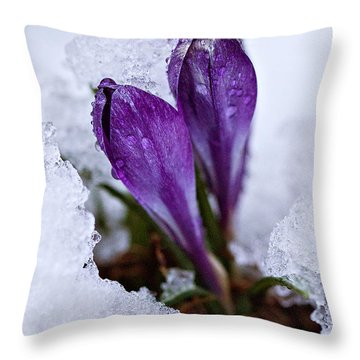 Throw Pillow featuring the photograph Spring Snow by Joan Davis