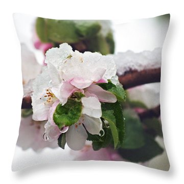Spring Snow On Apple Blossoms Throw Pillow by Lisa Knechtel