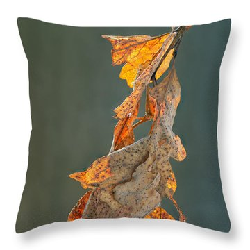 Spring Sun On Winter Oak Leaves Throw Pillow