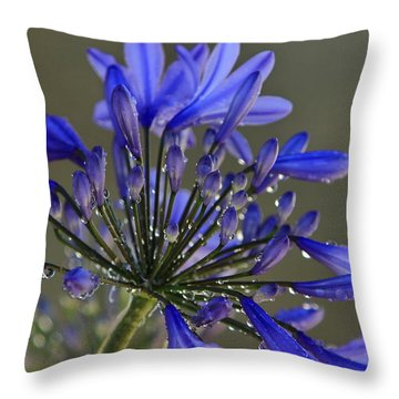 Spring Time Blues Throw Pillow
