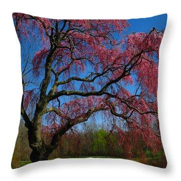 Spring Time Throw Pillow by Raymond Salani III