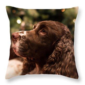 Springer Spaniel Throw Pillow by Matt Malloy