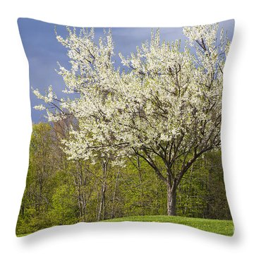 Springtime Blossoms Throw Pillow