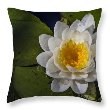 Springtime In The Swamp Throw Pillow