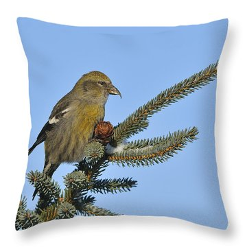 Spruce Cone Feeder Throw Pillow by Tony Beck