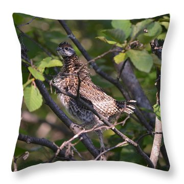 Throw Pillow featuring the photograph Spruce Grouse2 by James Petersen