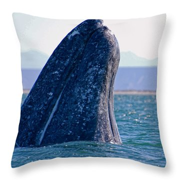 Throw Pillow featuring the photograph Spyhopping by Don Schwartz
