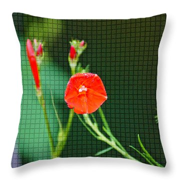 Squared Glory Throw Pillow