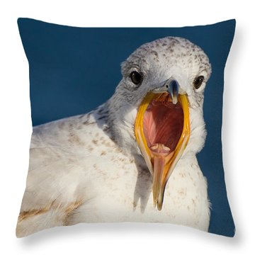 Squawking Ring-billed Gull Close Up Throw Pillow