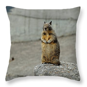 Throw Pillow featuring the photograph Squirrel At Lover's Point  by Susan Wiedmann