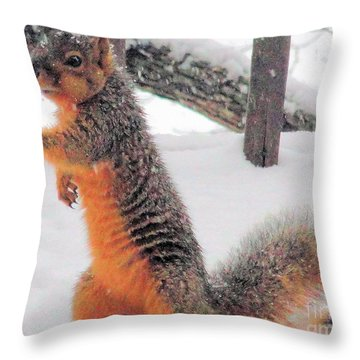 Throw Pillow featuring the photograph Squirrel Checking Out Seeds by Janette Boyd
