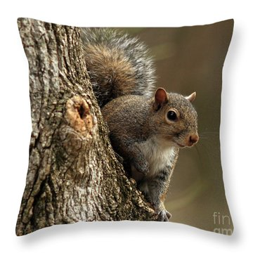 Squirrel Throw Pillow by Douglas Stucky