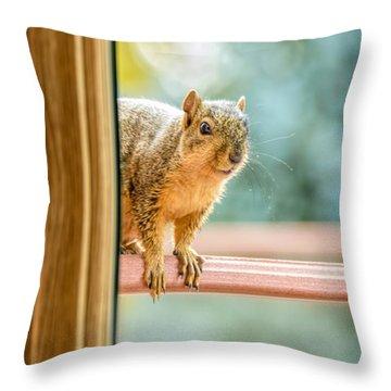 Squirrel In The Window Throw Pillow by LeeAnn McLaneGoetz McLaneGoetzStudioLLCcom