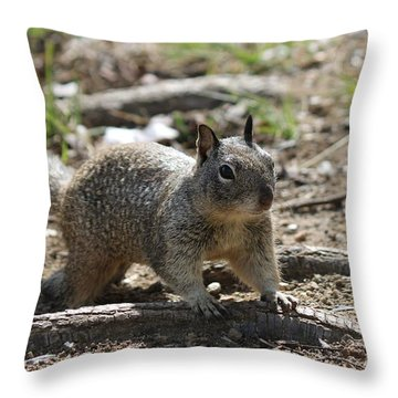 Squirrel Play  Throw Pillow