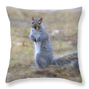 Throw Pillow featuring the photograph Squirrel With Dirt On Nose by Beth Sawickie