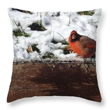 St. Louis Cardinal Throw Pillow
