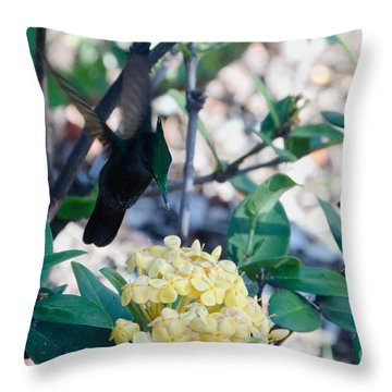 St. Lucian Hummingbird Throw Pillow