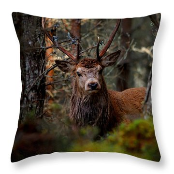 Stag In The Woods Throw Pillow