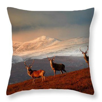 Stags At Strathglass Throw Pillow