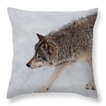 Throw Pillow featuring the photograph Stalker by Bianca Nadeau