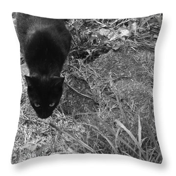 Stalking Cat Throw Pillow by Melinda Fawver