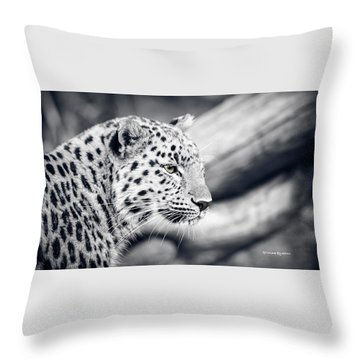 Throw Pillow featuring the photograph Stalking Prey by Stwayne Keubrick