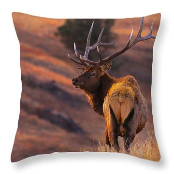 Throw Pillow featuring the photograph Stand Alone by Kadek Susanto