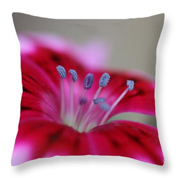 Standing Tall Sweet William Throw Pillow