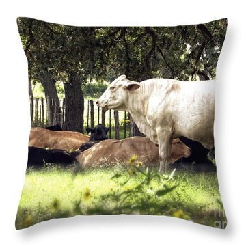 Standing Watch Cattle Photographic Art Print Throw Pillow by Ella Kaye Dickey