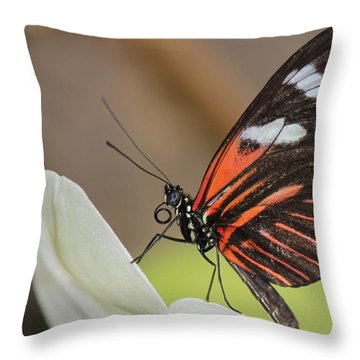 Standup Butterfly Throw Pillow