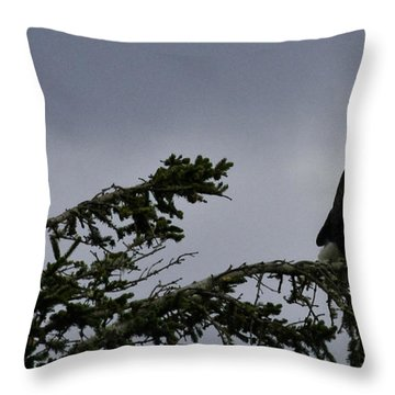 Throw Pillow featuring the photograph Stare Down by Betty Depee