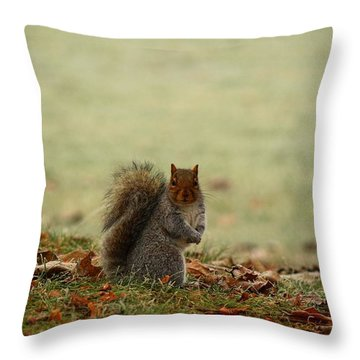 Throw Pillow featuring the photograph Stare Down by Lynn Hopwood