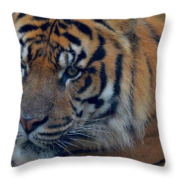 Stare Through Throw Pillow