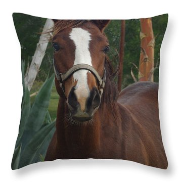 Throw Pillow featuring the photograph Stared Down by Peter Piatt
