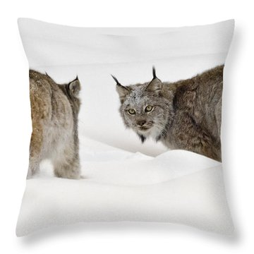 Staredown Throw Pillow