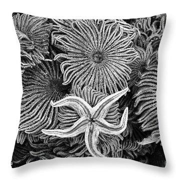 Starfish 3 Throw Pillow