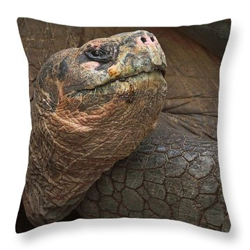 Staring  Back Throw Pillow