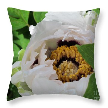 Throw Pillow featuring the photograph Stark Contrast by Arlene Carmel