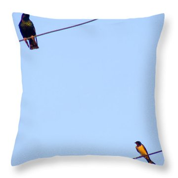 Starling And Swallow Throw Pillow by Tim Holt