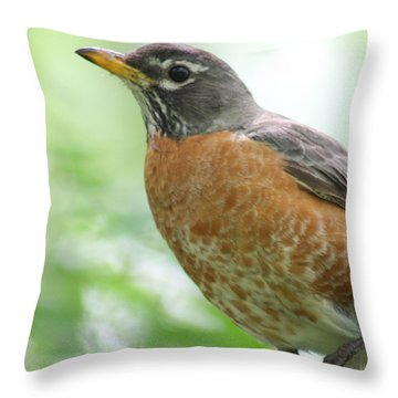 Stately Robin Throw Pillow