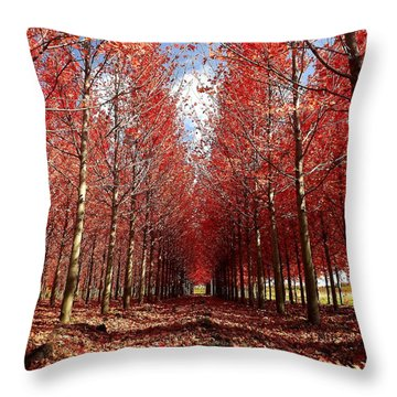 Throw Pillow featuring the photograph Stay by Viviana  Nadowski