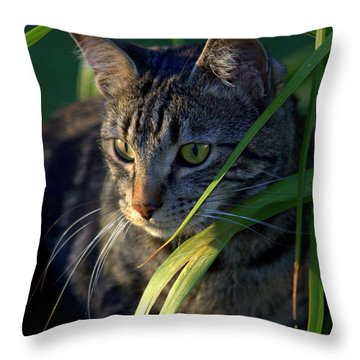 Stealth Sunset Curiosity Throw Pillow