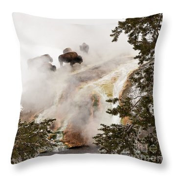 Steamy Bison Throw Pillow