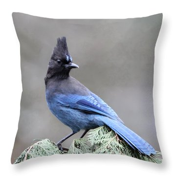 Steller's Jay Throw Pillow by Angie Vogel
