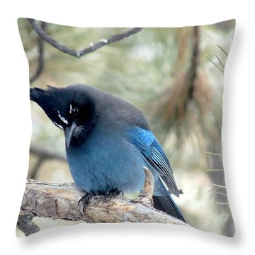 Steller's Jay Looking Down Throw Pillow