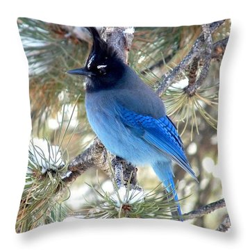 Steller's Jay Profile Throw Pillow